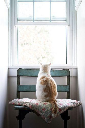 Kočka, která kouká z okna