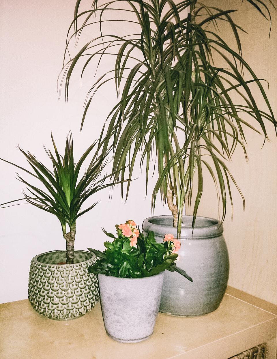 Květináče u Jíti