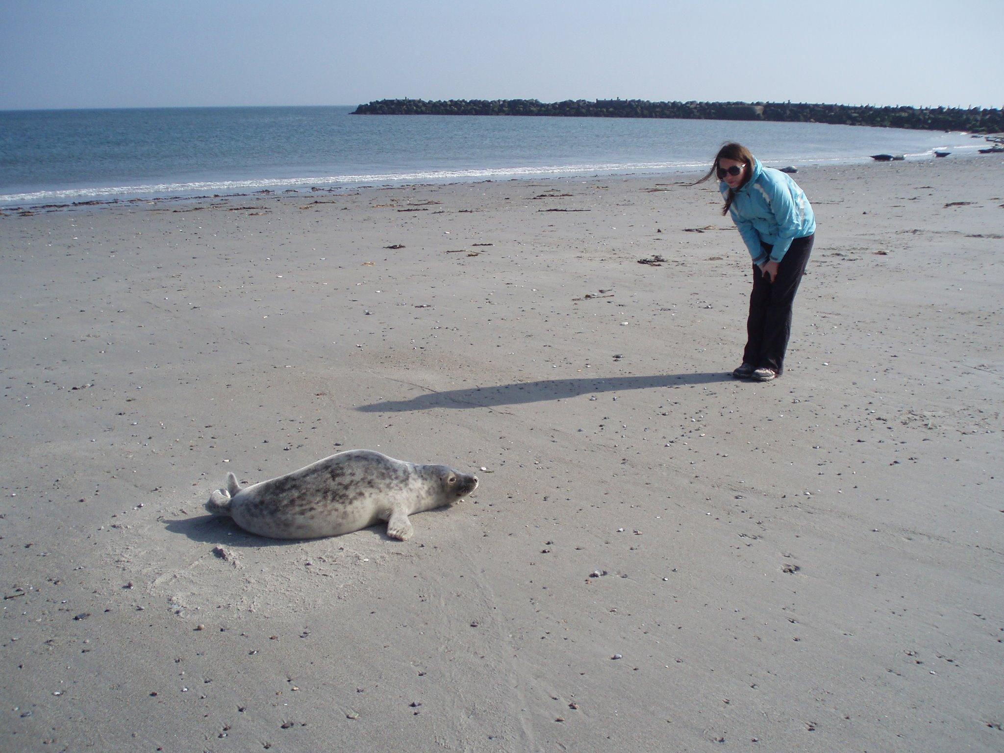Na ostrově Düne v Severním moři se k tuleňům dostanete doslova na pár metrů