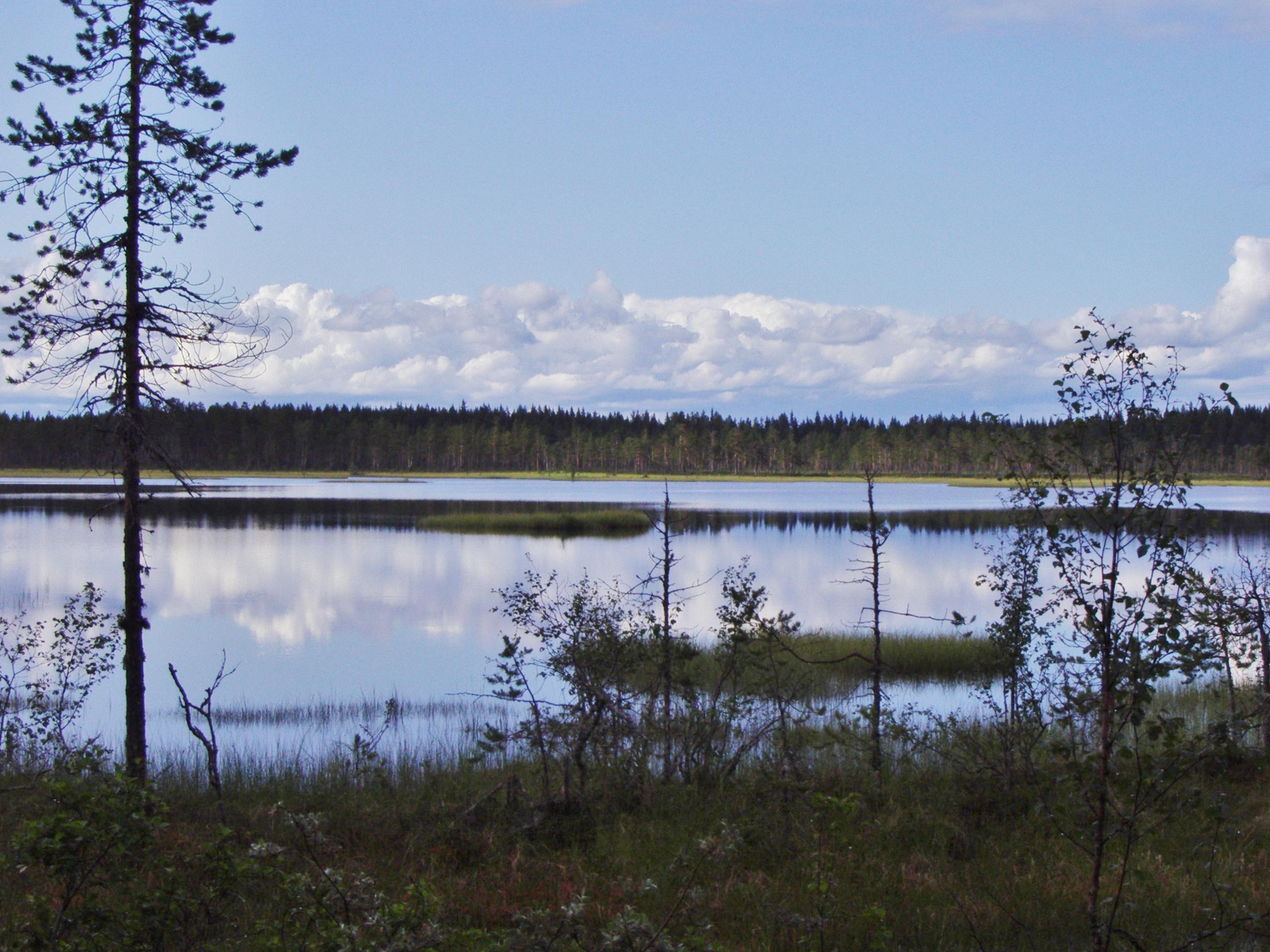 Švédská příroda je opravdu neskutečná. Národní park Hamra je toho důkazem