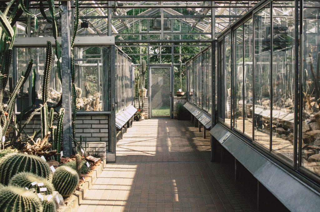 Kde v centru Prahy najít oázu klidu? Zkuste se zastavit v botanické zahradě Přírodovědecké fakulty :)