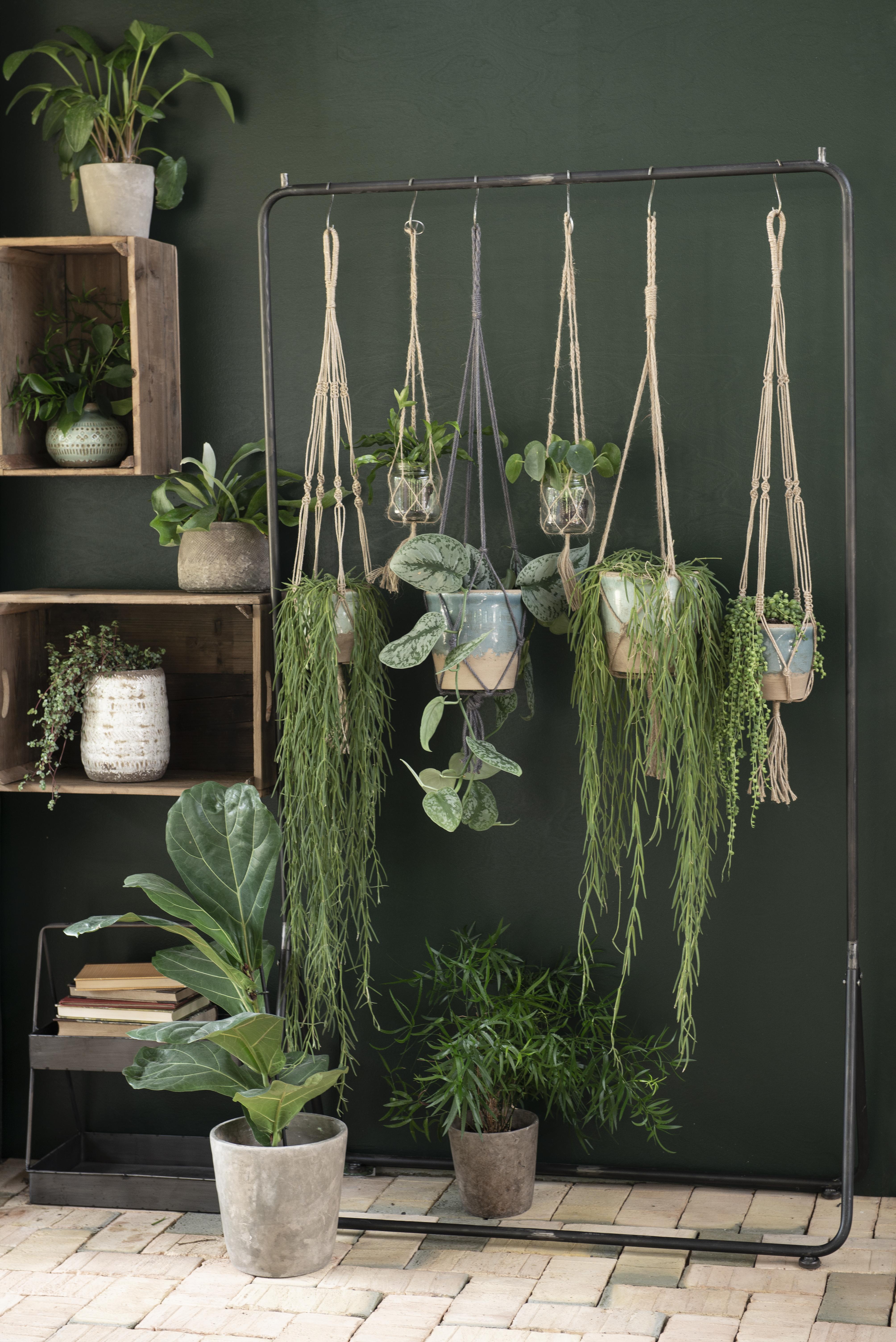 Ak chcete bývať podľa najnovších trendov, rozhodne by ste mali mať doma dostatok izbových rastlín