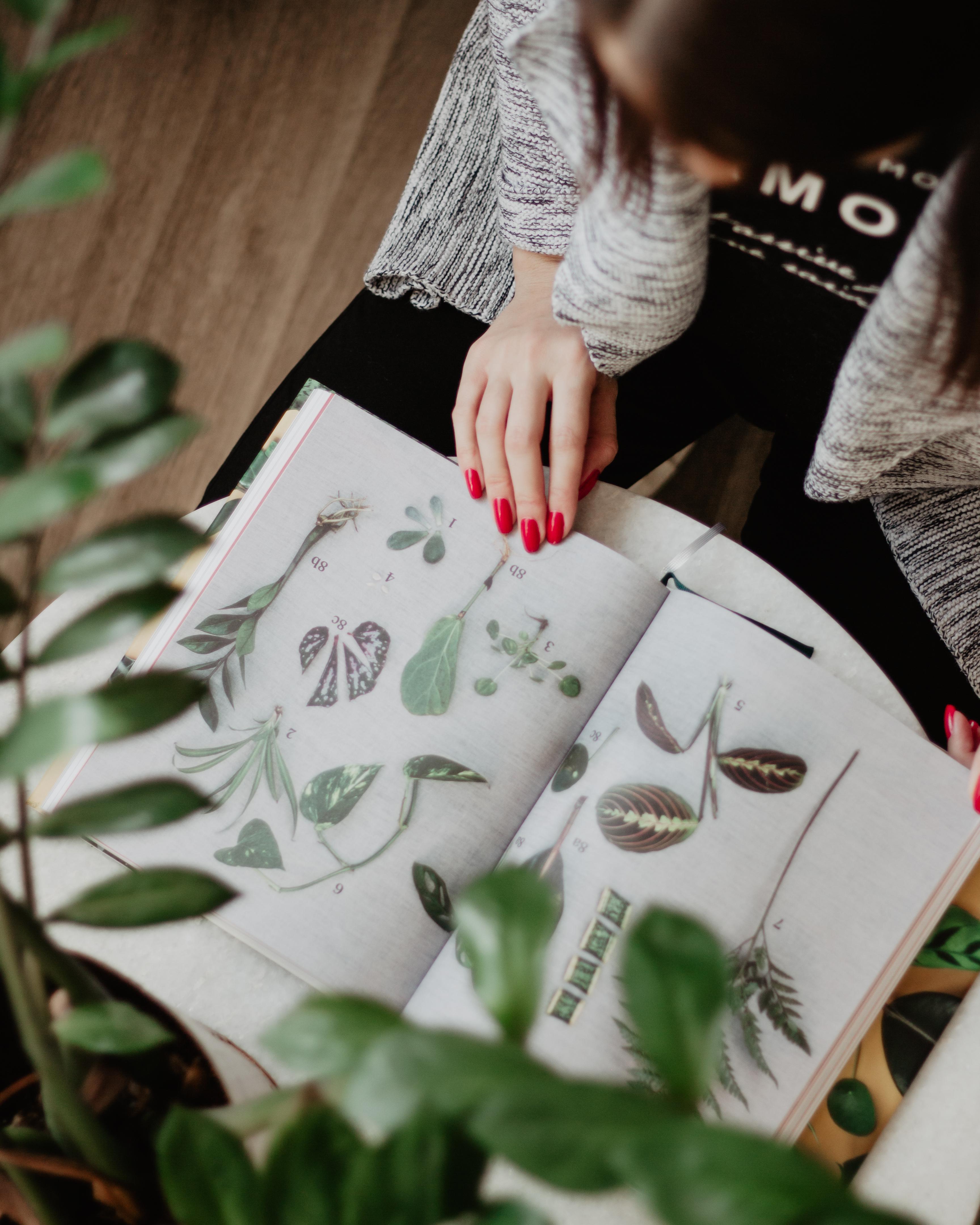 Na Bella Rose najdete knihy, které vám s pěstováním pokojovek pomohou