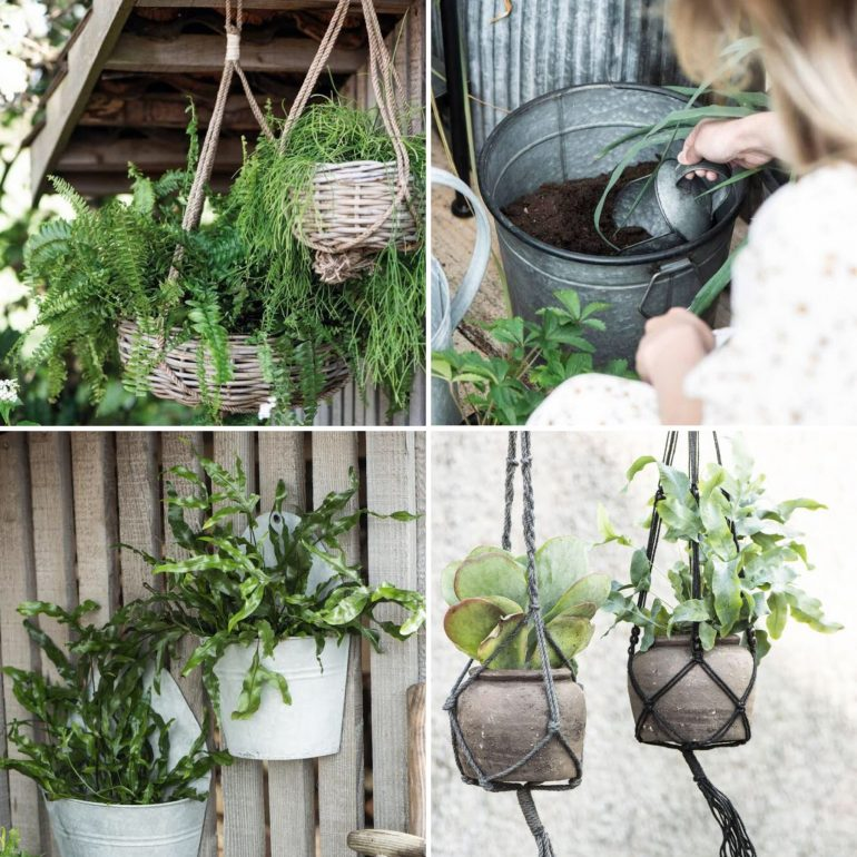 zelené rostliny na balkon jednoznačně patří